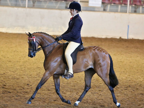 CP Sweet Embrace_PC14 trot_LM