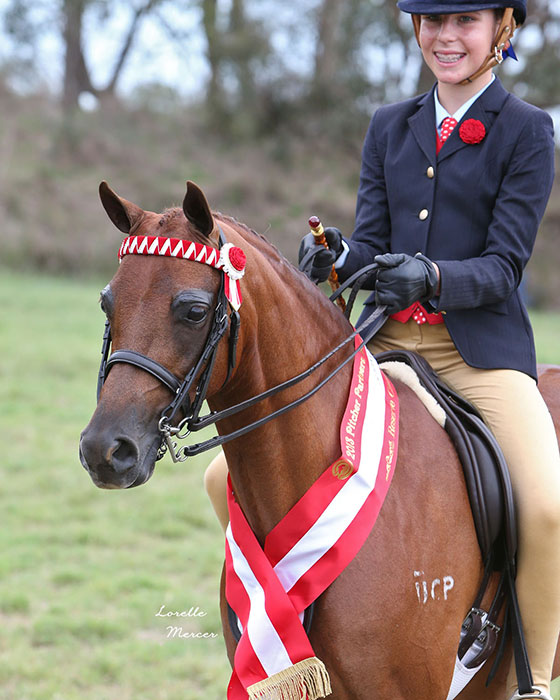 CP-Indulgence_Runnerup-Small-Pony-PC13_LM